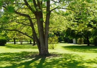 casa-in-legno-con-grande-giardino