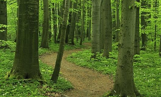Case ecologiche in legno: ecco il legno adatto alla costruzione delle nostre case ecosostenibili.